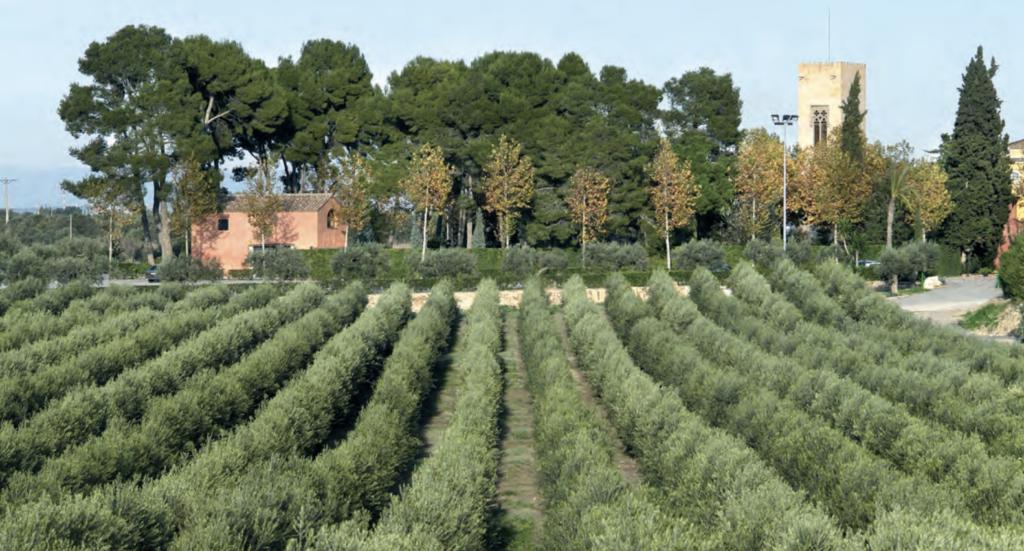Foto 1. Finca La Boella (Reus, Tarragona). Plantación realizada en el año 1995.