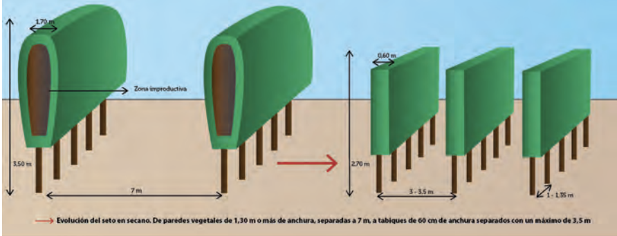 Figura 1. Evolución del modelo en seto en secano para aumentar su eficiencia productiva