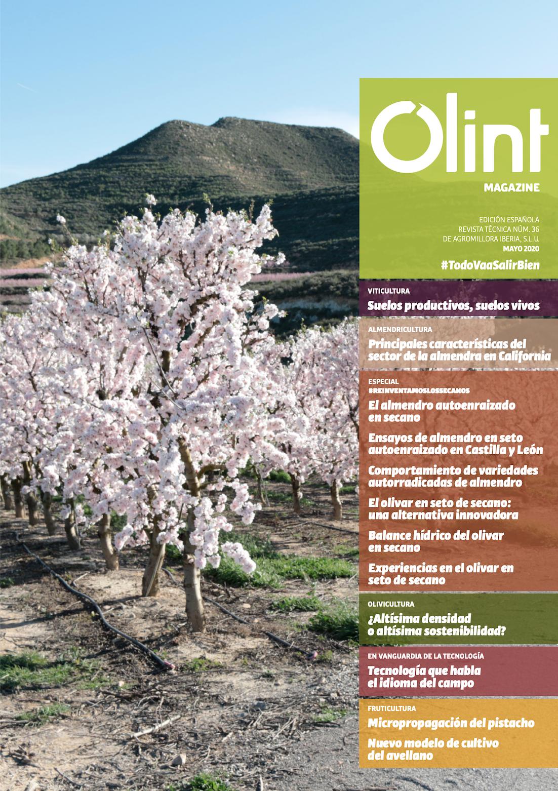 Revista Olint nº36
