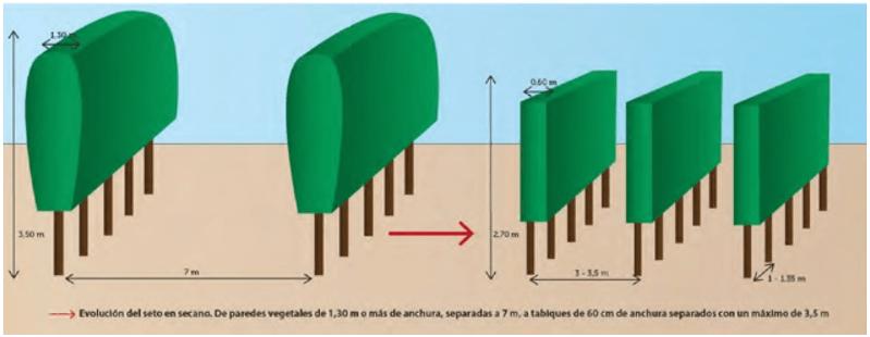Evolución del modelo en seto en secano para aumentar su eficiencia productiva