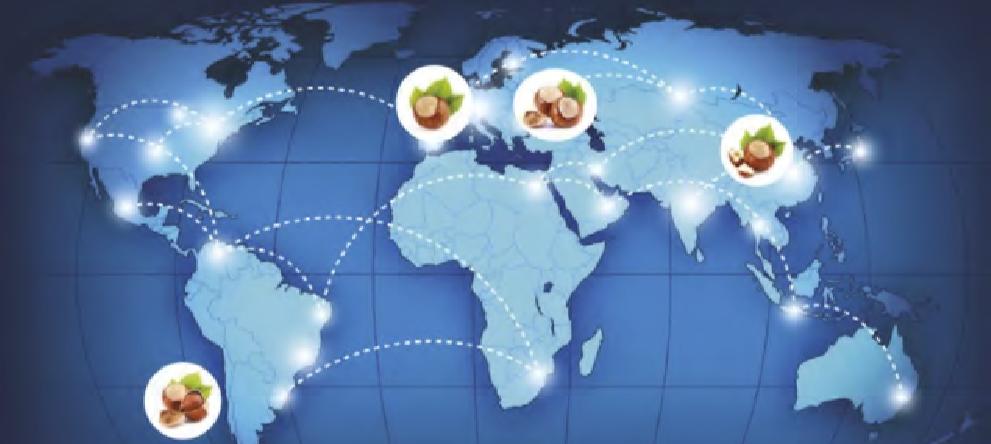 Incremento Del Comercio Mundial De Avellanas.