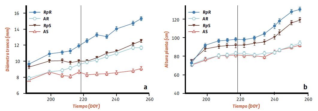 Evolución del diámetro del tronco (a) y de la altura de la planta (b) en plantas de almendro autorradicadas e injertadas sobre Rootpac20 y sometidas a distintos tratamientos de riego. Valores son las medias ± s.e.,n=20. Los símbolos representan los diferentes tratamientos: RpR (circulo relleno), AR (círculo vacío), RpS (triángulo relleno) y AS (triángulo vacío). La línea vertical representa el cambio de riego.