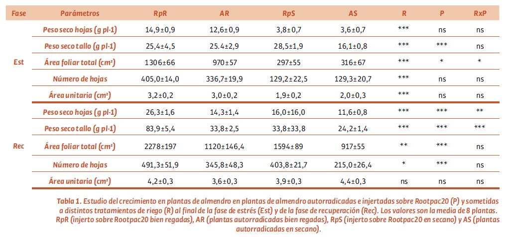 Tabla 1. Estudio del crecimiento en plantas de almendro en plantas de almendro autorradicadas e injertadas sobre Rootpac20 (P) y sometidas a distintos tratamientos de riego (R) al final de la fase de estrés (Est) y de la fase de recuperación (Rec). Los valores son la media de 8 plantas. RpR (injerto sobre Rootpac20 bien regadas), AR (plantas autorradicadas bien regadas), RpS (injerto sobre Rootpac20 en secano) y AS (plantas autorradicadas en secano).