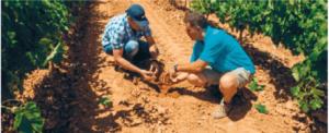 Comprobación humedad del suelo