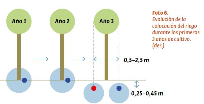 Evolución de la colocación del riego durante los primeros 3 años de cultivo.