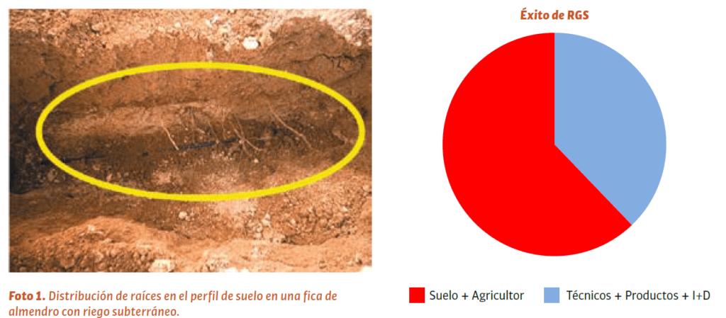 Distribución de raíces en el perfil de suelo en una fica de almendro con riego subterráneo.
