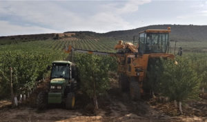Two different over-row harvesters and harvest systems: New Holland (left), Gregoire (right).