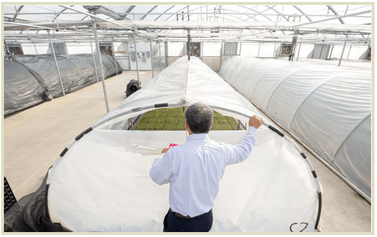 These acclimation hoop tunnels inside the greenhouse control temperature, humidity and light density for the tiny plants. Depending on the crop, plants are acclimated here for three to five weeks and then moved to the growing greenhouse.