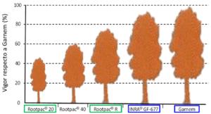 """Figura 6: Vigor conferido por diferentes patrones de la serie """"Rootpac®"""", con respecto a los de referencia: Garnem y GF-677."""