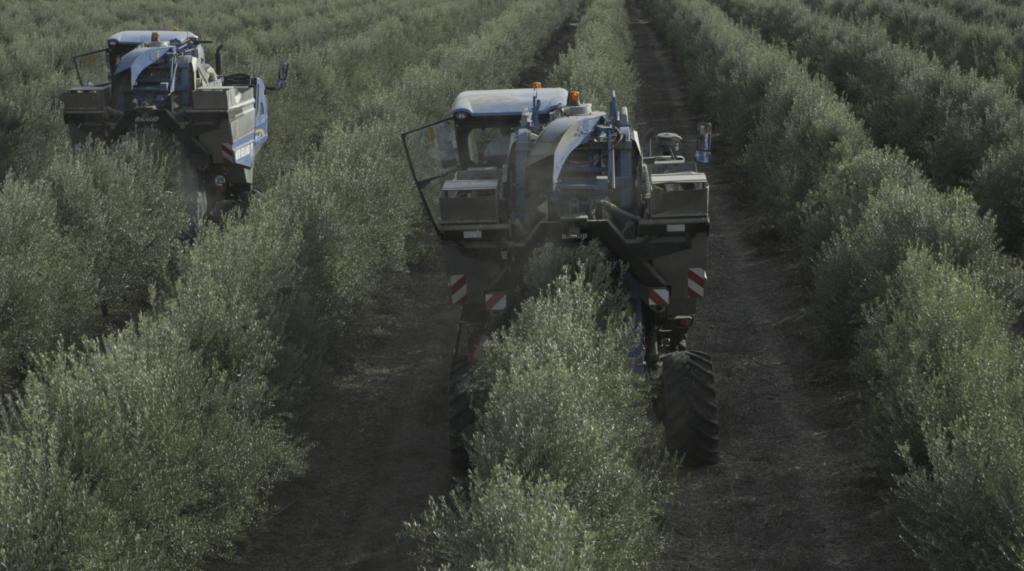 olivar en superintensivo