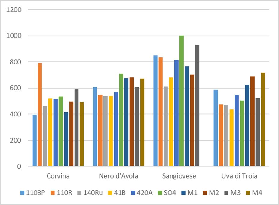 Comparación de contenido en antocianos de 4 variedades tintas sobre 10 portainjertos distintos. Datos medios de 4 ensayos en 4 zonas climáticas distintas