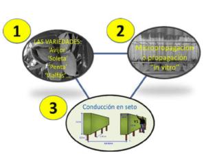 Figura 4. Los tres componentes en los que se basa el modelo de producción propuesto.