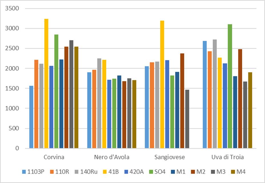 Comparación de producción por planta de 4 variedades tintas sobre 10 portainjertos distintos. Datos medios de 4 ensayos en 4 zonas climáticas distintas durante 6 años.