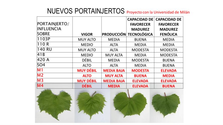 Comparación de portainjertos M con respecto a los más habituales empleados en España.