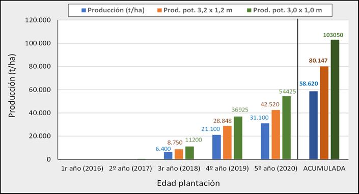 Figura 8.- Producciones anuales y acumuladas de la variedad d'Agen en Agrícola San Miguel (Peralillo, O'Higgins, Chile), hasta el quinto año de plantación con un marco de 3,5 x 1,5 m y producciones potenciales esperadas para marcos de plantación de 3,2 x 1,2 m y 3,0 x 1,0 m.