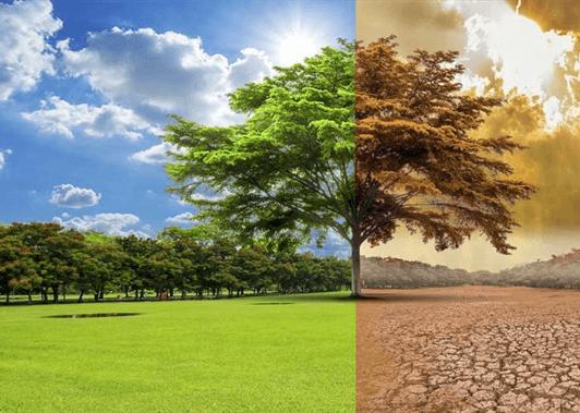 Innovación Viverística Adaptada Al Cambio Climático Y A Las Restricciones Fitosanitarias