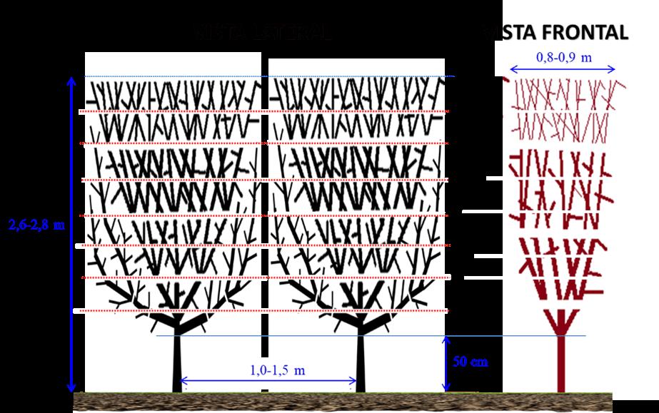 Figura 3.- A la izquierda árbol Smarttree con protector preparado para su plantación. A la derecha vista lateral y frontal del seto con las dimensiones del mismo.