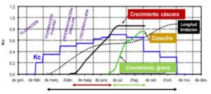 Figura 13: Ciclo anual del avellano indicando los diferentes estados fenológicos y la Kc. Fuente: adaptado de IRTA.
