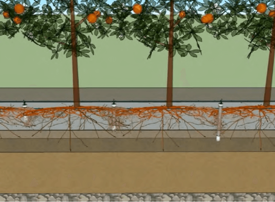 Figura 2. Diagrama de ubicación de sondas lisimétricas de succión de solución suelo a distintas profundidades del perfil.