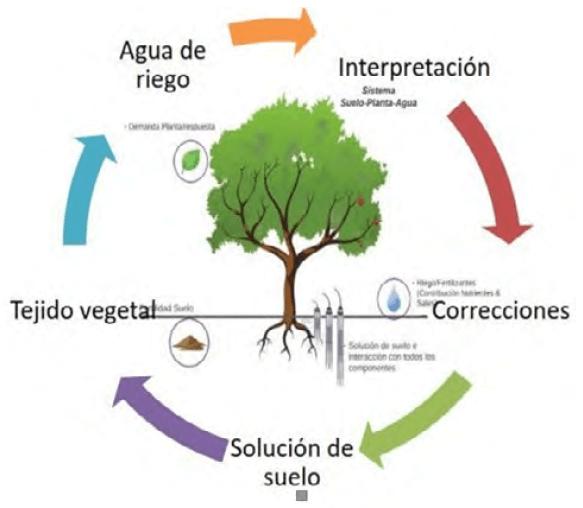 Figura 4. Diagrama cíclico de la auditoría del istema suelo-agua-planta.