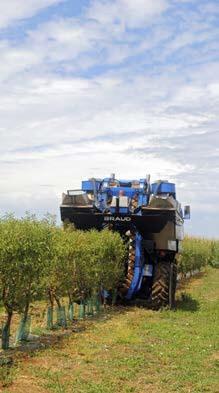 Al hacer la cosecha con este tipo de máquinas automotrices, la fruta no toca el suelo ni se contamina con patógenos ni pesticidas