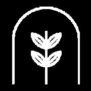 iconos-innovacion-agromillora-campo-planta-madre3