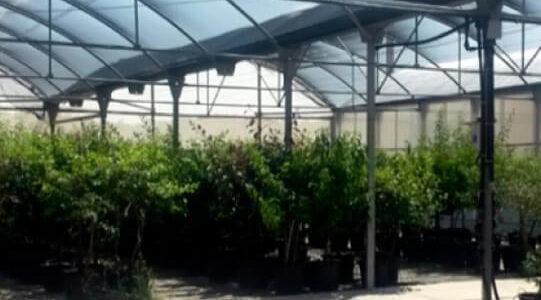 plataforma-material-vegetal-infraestructuras-servicios-agromillora5