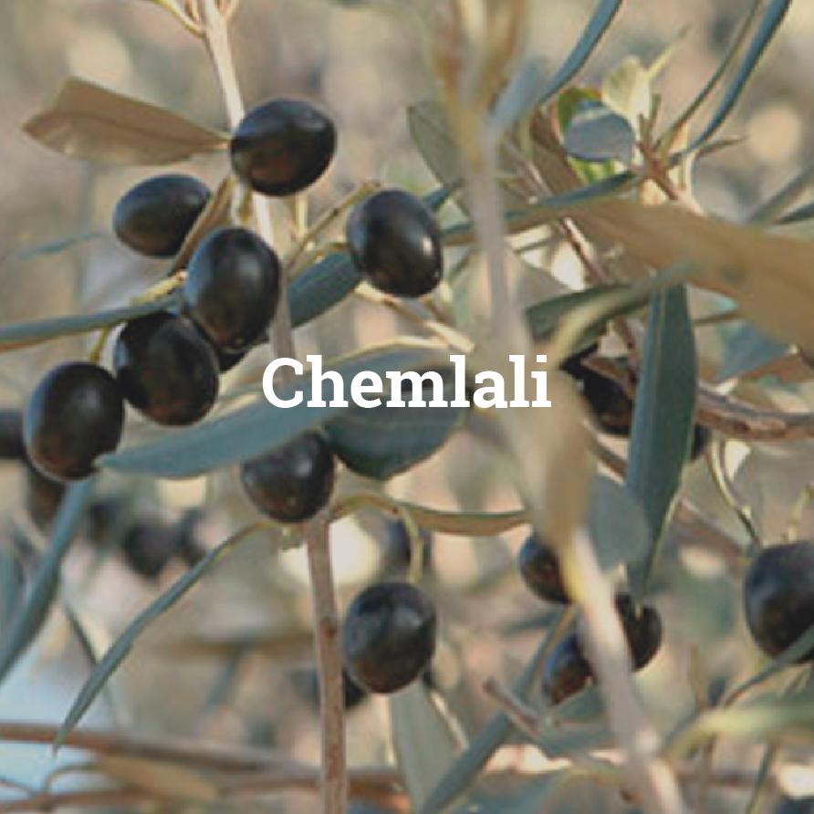 chemlali olivier