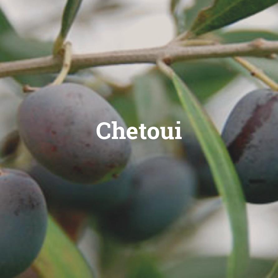 chetoui