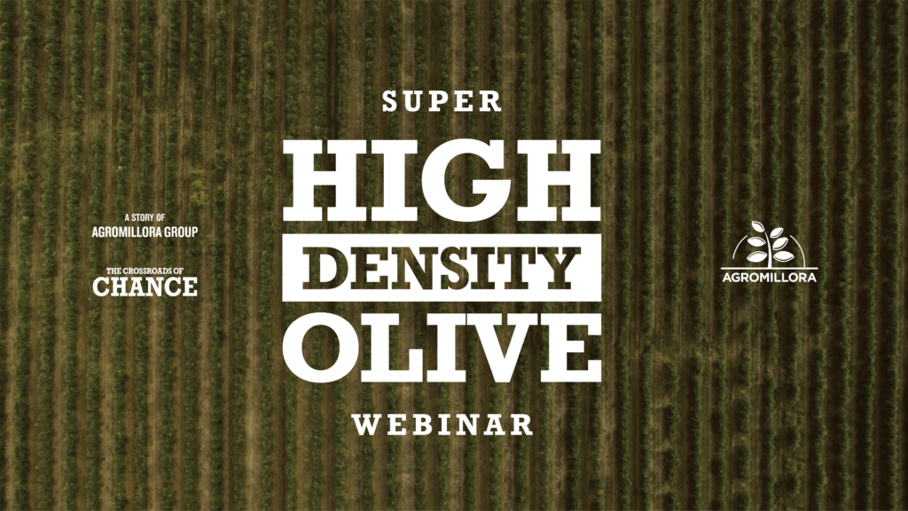Super High Density Olive Webinar